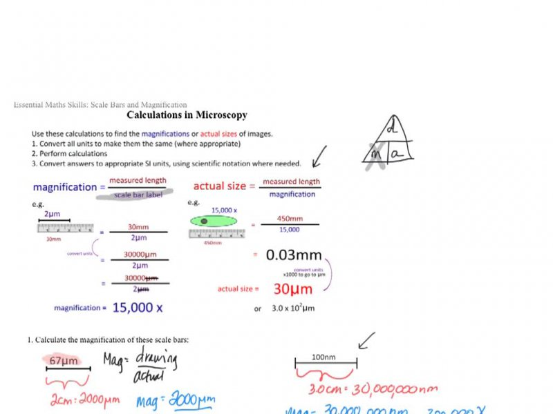 Microscope Magnification 2