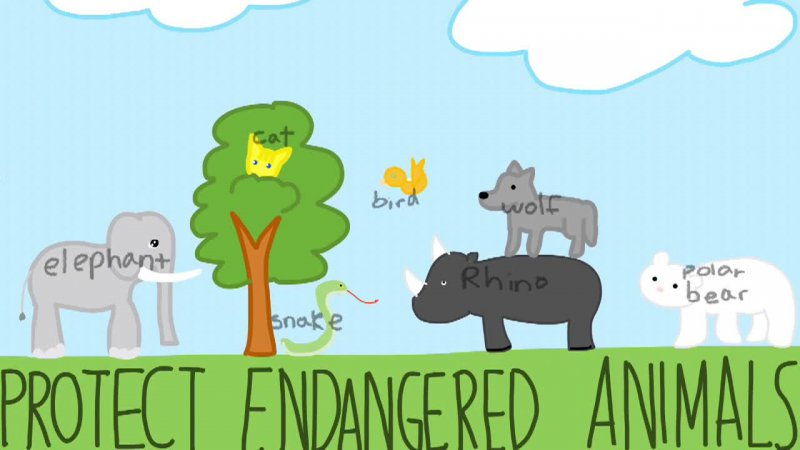 Protect Endangered Animals